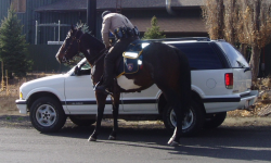 Coconino County Sheriff's Office deputy on horse conducting traffic stop